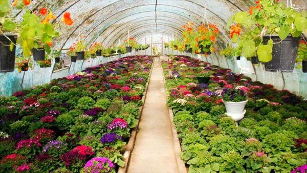 ۱۲۰ پروانه احداث گلخانه کوچک مقیاس در کردستان صادر شد