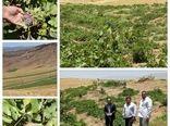 طرح توسعه باغات دراراضی شیبدار گامی درراستای ایجاداشتغال زایی ودرآمدپایدار