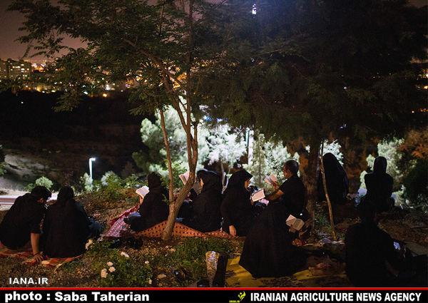 شب قدر؛ پارک جنگلی کوهسار