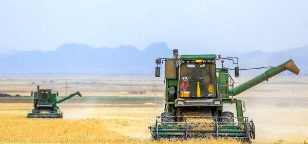 تولید گندم در اصفهان ۶۵ درصد کاهش یافت