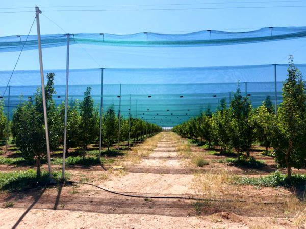 مدرنترین طرح سایبان باغهای میوه کشور فردا در استان قزوین افتتاح میشود