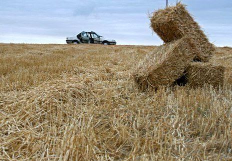 استقبال کشاورزان از کشت و تولید گندم، نباید مانع کشت سایر محصولات کشاورزی شود