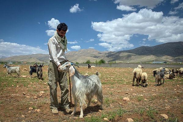 بیشترین اثر خشکسالی در جامعه عشایری است