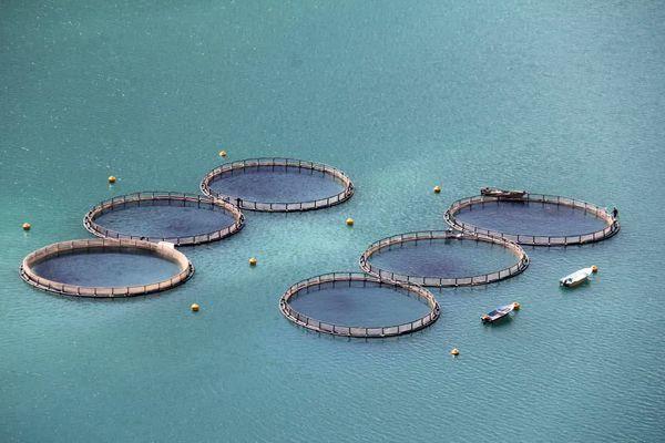 پرورش ماهی در قفس، انقلابی در عرصه تولید و رونق اقتصادی است