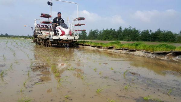 تاکنون صد هزار هکتار از مزارع گیلان به زیر کشت برنج رفت