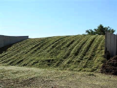 تولید 7 هزار تن ذرت علوفه ای در سپیدان