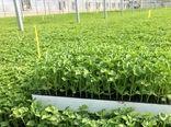 یک گلخانه تولید نشاء در ارسنجان آغاز به کار کرد