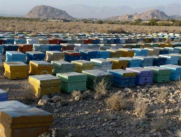 زنبورداران تا دو روز دیگر برای ثبت نام در طرح سرشماری زنبورستان ها فرصت دارند