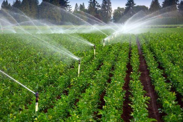 بهرهوری آب در خراسان شمالی ۲۳ درصد افزایش یافت