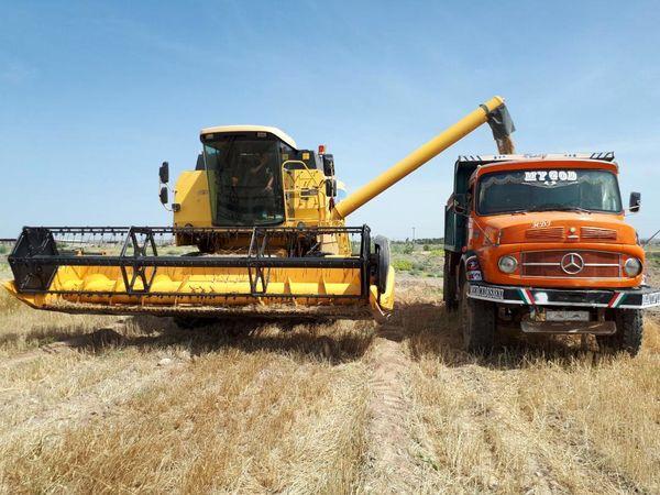 امسال 200 هزارتن گندم درسیستان وبلوچستان برداشت می شود