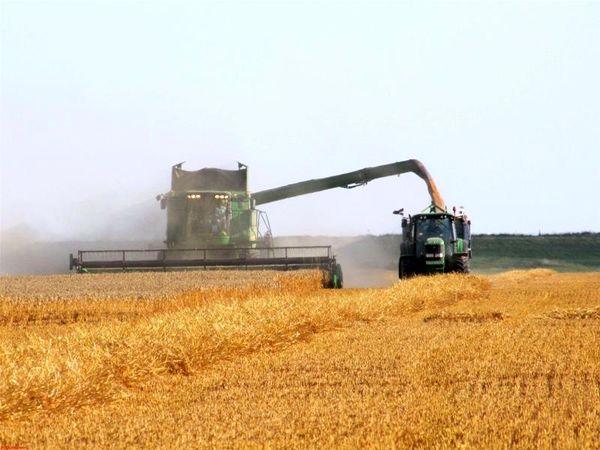 برداشت گندم در مناطق جنوبی کشور آغاز شد