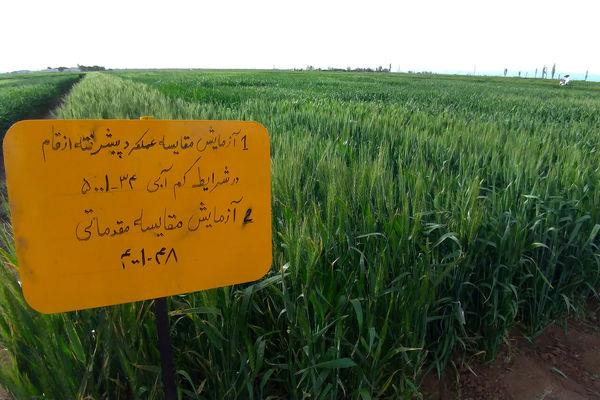 اجرای سالانه ۸۰ پروژه پژوهشی در بخش کشاورزی چهارمحال و بختیاری