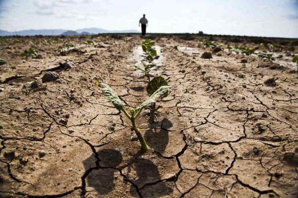 سقوط آزاد کشت محصولات زراعی در شهرستان بروجن