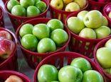 ۶۰ درصد از سیب صادراتی کشور از طریق آذربایجانغربی تأمین شد