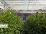 ۱۰ گلخانه کوچک مقیاس در کردستان به بهرهبرداری رسید