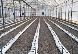 آغاز ساخت گلخانه ۱۰۰ هکتاری شیروان تا دو هفته آینده