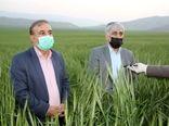 مدیریت کشاورزی در لرستان موفق بوده است