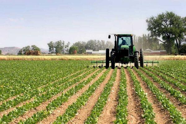 کشاورزی در کردستان فرصتی برای رسیدن به توسعه است