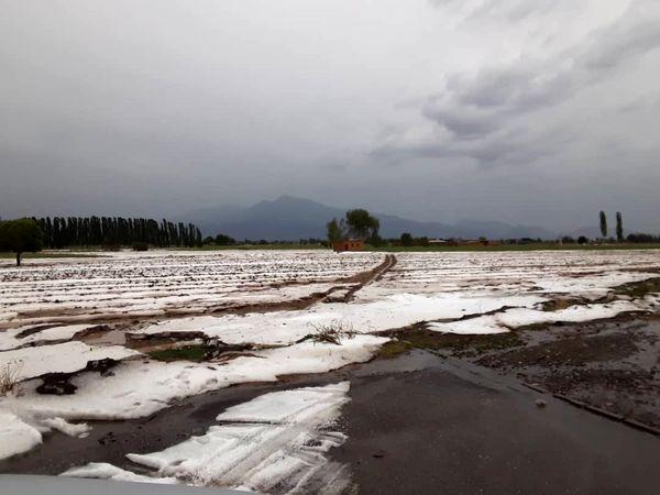 هزار هکتار از اراضی خوی در اثر بارش تگرگ خسارت دید