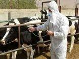 رشد ۱۲ درصدی عملکرد دامپزشکی خراسان شمالی در واکسیناسیون دامها