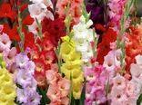 ایران در رتبه 17 تولید گل و گیاه و در رتبه 107 صادرات!/ ۲۳ کشور گلهای ایرانی را خریدند