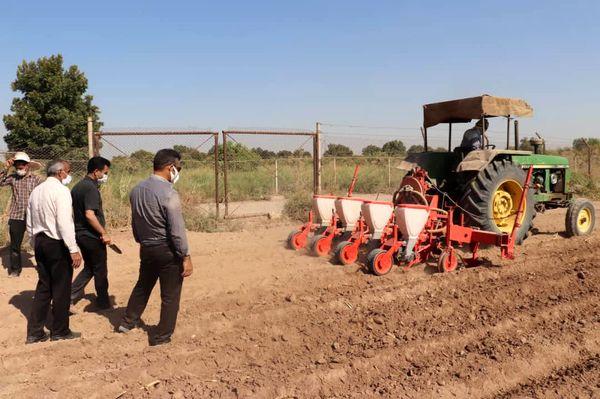 تولید گیاه سزبانیا و بذر هیبرید سینگل کراس در طرح یاوران تولید