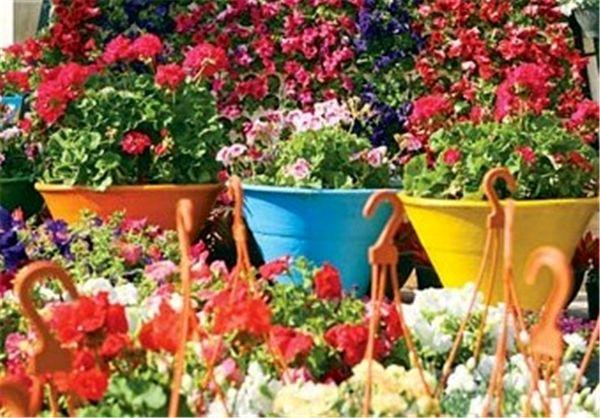 اشتغالزایی با پرورش گلهای زینتی در اصفهان