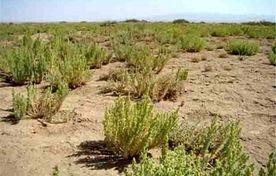 احداث شهرکهای کشاورزی برای مهار ریزگردها