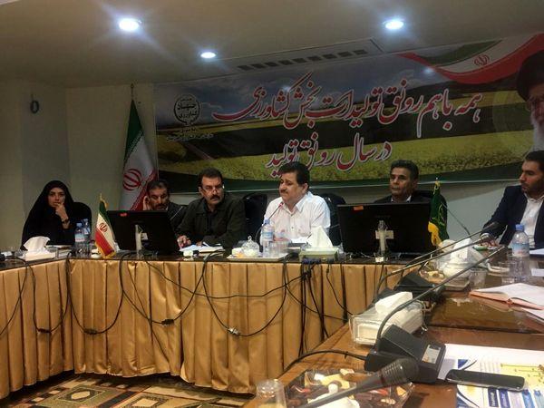 افزایش بهرهوری در تولید با اجرای طرح ملی گندم بنیان در استان خوزستان