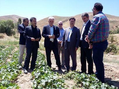 حمایتهای جهاد کشاورزی از تولیدکنندگان، مهاجرت روستائیان را کاهش داد