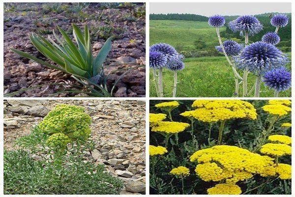 وجود 8000 گونه گیاهی در لرستان/ بسیاری از گونههای گیاهی در خطر انقراض و فرسایش ژنتیکی هستند