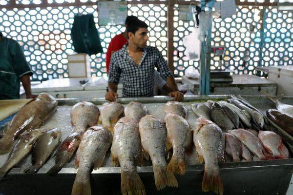 جدیدترین قیمت مرغ و ماهی در بازار/ قیمت مرغ با بیشترین نوسان از آبزیان پیشی گرفت
