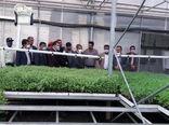 استاندار قزوین از واحد گلخانه کشت نشا صیفیجات در شهرستان بوئین زهرا بازدید کرد