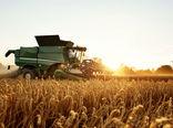 خرید تضمینی ۲۷۳ هزار تن گندم در کردستان
