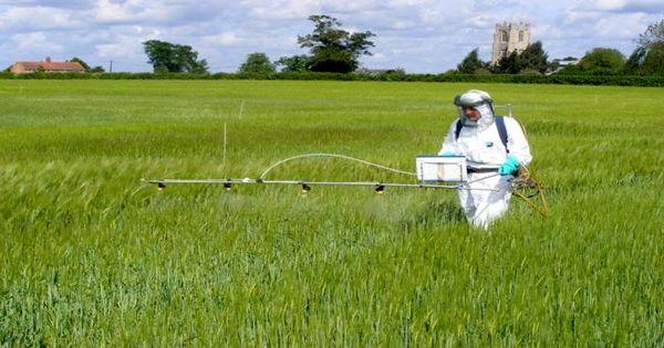 مشاهده بیماریهای قارچی در گندمزارهای شیروان