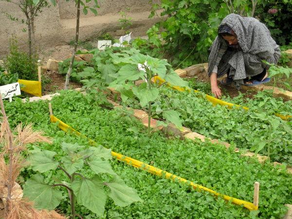 زنان روستایی شهرستان البرز با کشت صحیح سبزیجات در باغچههای خانگی آشنا شدند