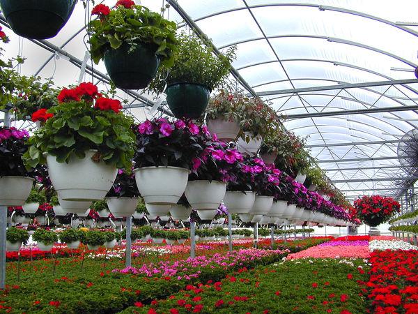 مراقب سرمازدگی گلخانهها و زنبورداریها باشید