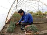 آموزش ۵۰۰ هزار نفر کارگر ماهر مهارت آموخته گلخانهها تا پایان سال ۱۴۰۴