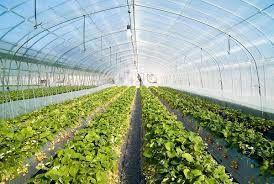 تصویب ۴۱۵ طرح اشتغالزای کشاورزی در استان کرمانشاه