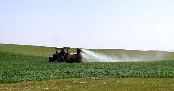 کنترل عوامل خسارتزای گندم و جو در سطح بیش از 70 هزار هکتار از مزارع غلات استان مرکزی
