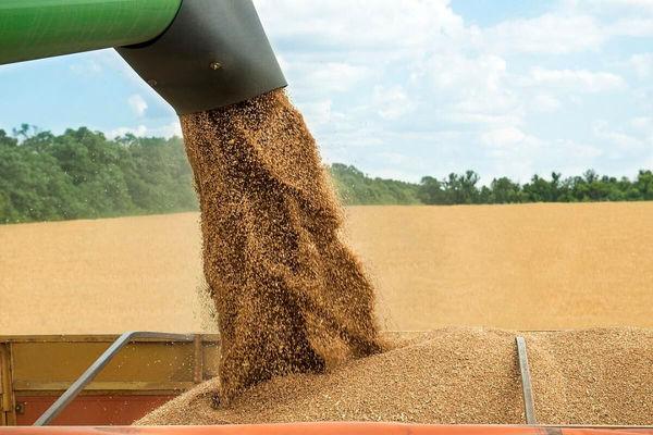 خرید گندم از کشاورزان قزوینی از مرز ۶۷ هزار تن عبور کرد
