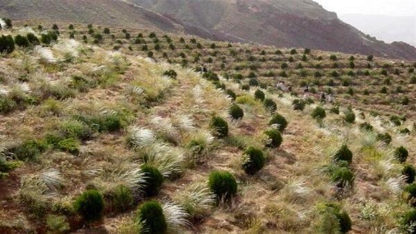 اختصاص یک هزار و ۲۰۰ هکتار از عرصههای منابعطبیعی به جنگل کاری و بذرکاری