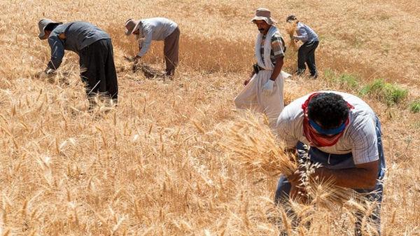 اختصاص 2 هزار و 760 میلیارد ریال تسهیلات سرمایه در گردش برای گندمکاران آذربایجان غربی