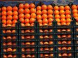 افزایش سهم بخش کشاورزی و صنایع غذایی در صادرات