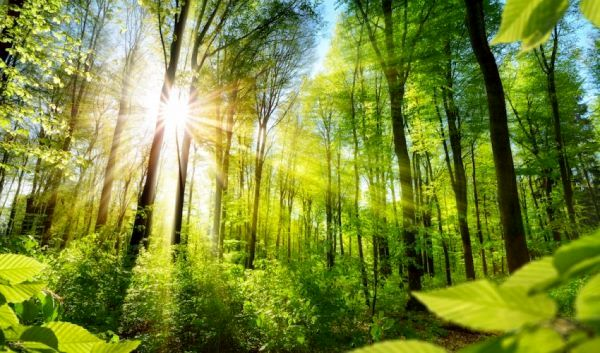 پروژه جهانی جنگلی برای جبران انتشار گازهای گلخانهای در دوره ترامپ
