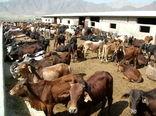 190 هزار راس دام سبک وسنگین در سیستان و بلوچستان پلاک کوبی شدند