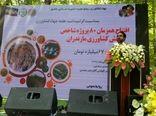 افتتاح همزمان 80 پروژه کشاورزی در مازندران