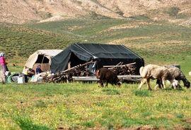 هیچ یک از ۱۵هزار نفرعشایر استان تهران تاکنون به بیماری کرونا مبتلا نشده است