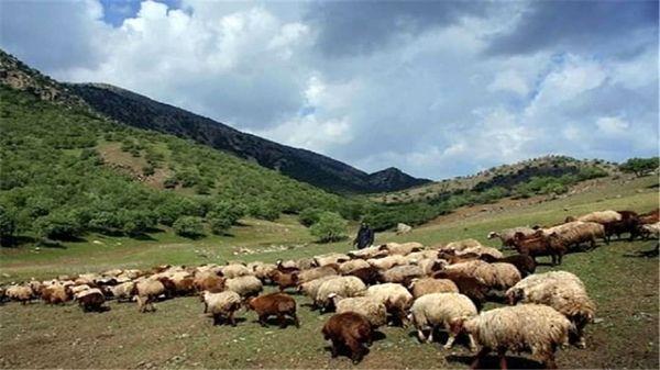 اخراج 2هزار و 584واحد دامی غیرمجاز از مراتع شهرستان فیروزکوه