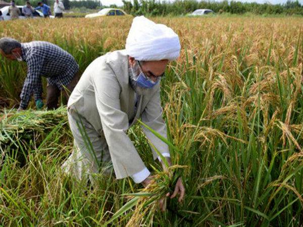 جایگاه ویژه زنجان در تولید کشاورزی کشور